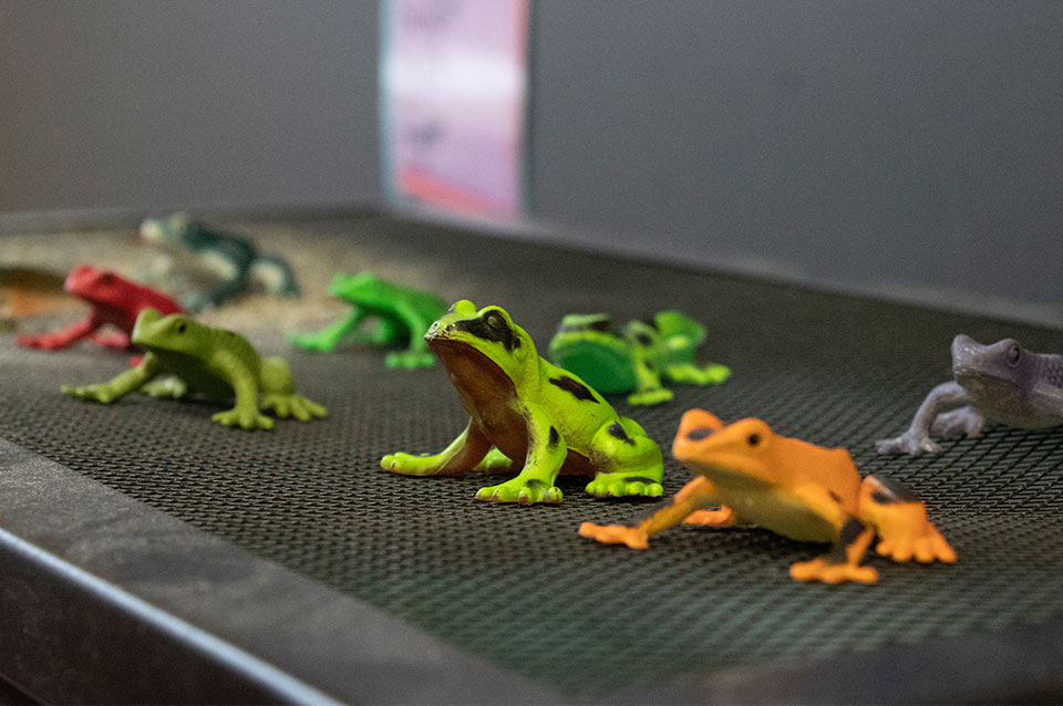 Frog toys 2nd grade class
